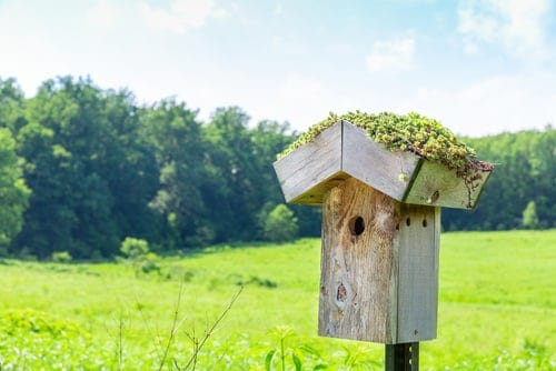 How to Connect Bird Box Camera to TV